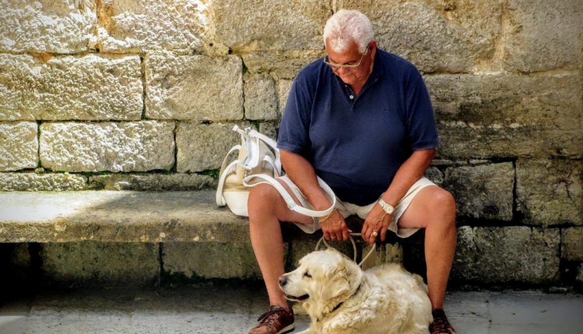 Humans and dog companionship